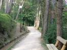 Passeggiate tra i boschi