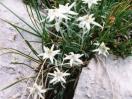 Casa a Schilpario - La Valle di Scalve - una stella alpina