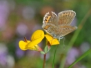 casa-levico-terme-farfalle