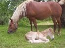 casali-toscana-sansepolcro-cavalli