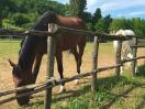 agriturismo-gualdo-tadino-ranch-cavalli