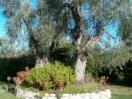 vieste-giardino