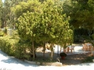 hotel-gargano-giardino718
