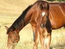 cavalli-campitello-matese
