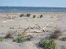 rifugio-deltadelpo-13-spiaggia
