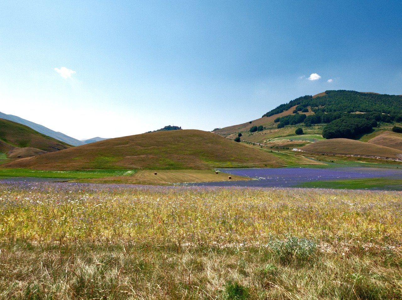 A Castelluccio di Norcia la fioritura entra nel suo culmine.